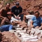 befunky collage 8 - Con 140 millones de años, el fósil de titanosaurio más antiguo del mundo es hallado en Argentina