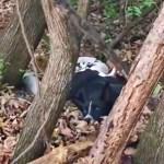 perra madre cachorros abandono - Mamá perruna yacía en un bosque abandonada, sobreviviendo con sus cachorros. Los cuidaba con su vida