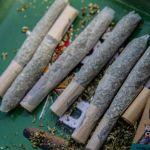porritos - El uso lúdico de la marihuana fomentrá la investigación científica, dice académico de la Ibero