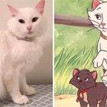"""gatita 3 - Salvano una gattina bianca e la chiamano Duchessa. E lei dà alla luce i suoi """"Aristogatti"""""""
