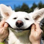 Se rien los animales - ¿Se ríen los animales?