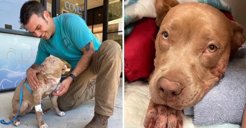 Fondo perro rescate cuchillo - Perro se escondió bajo un coche tras ser acuchillado. Su rescatista lo ayudó y después dio un hogar