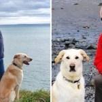 ciego perro guia vuelo - Noticias al momento