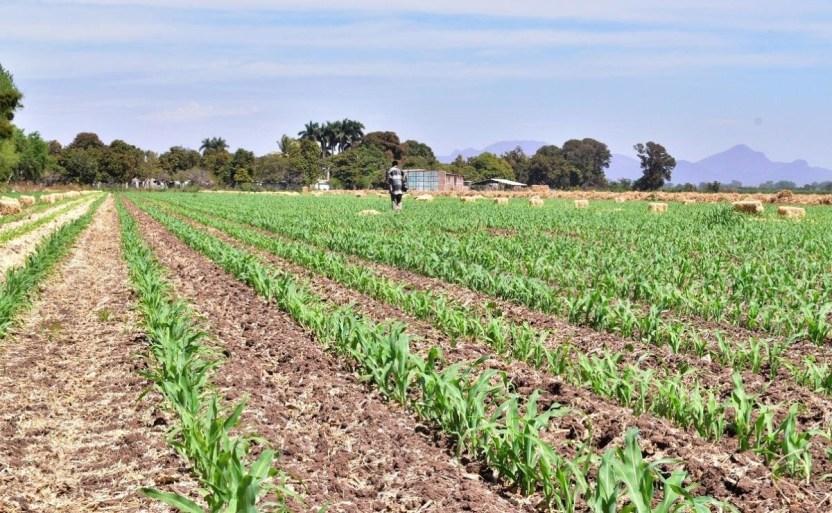 promueven agricultura sana cuidando el suelo en angostura crop1624408046196.jpg 242310155 - Promueven agricultura sana cuidando el suelo en Angostura
