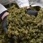 GettyImages 1232509154 - Demócratas piden la Ley SAFE: la bancarización de la industria del cannabis