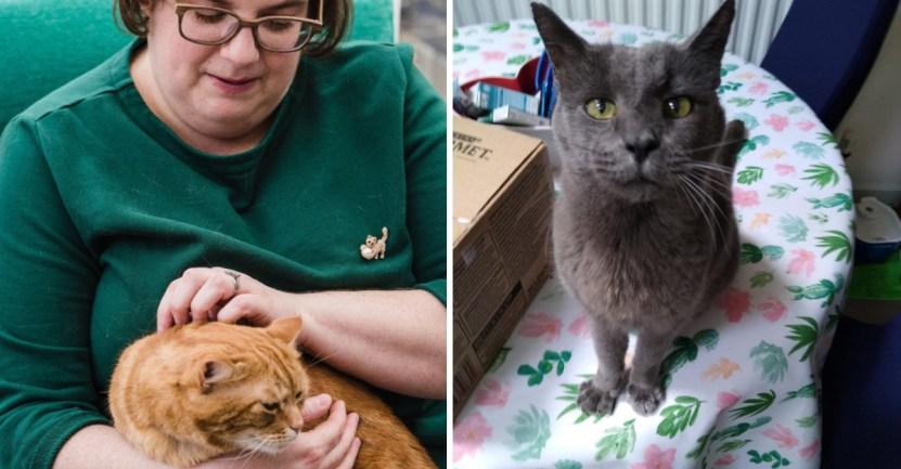 gato mujer profesional  - Mujer dejó su importante cargo en una empresa para cuidar a sus 150 gatos. Ellos son su prioridad