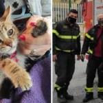 gato rescatado bomberos - Gatita en peligro es salvado por bomberos y voluntarios que desplegaron intenso operativo de rescate