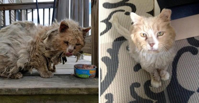 gato rescate calle pelos - Minino que era una bola de pelos, sucio y con hambre, tuvo radical cambio. Ronronea en su casa nueva