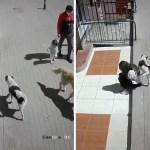 perro joven orinar - Perro callejero confundió a joven con un árbol y orinó en ella. Parecía estar triste y su día empeoró