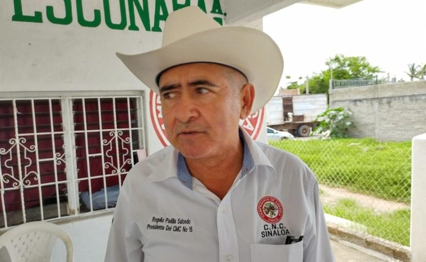 reducen apoyo en sorgo para los campesinos en escuinapa x1x.jpeg 242310155 - Reducen apoyo en sorgo para los campesinos en Escuinapa