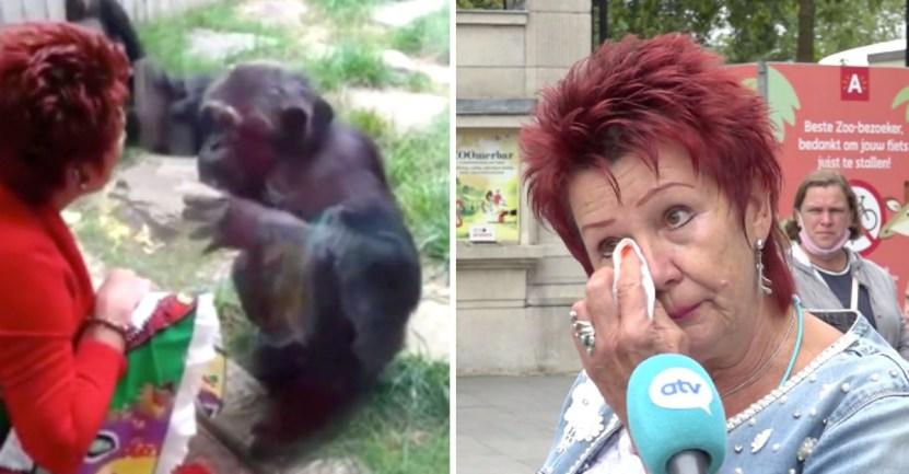 """chimpance mujer enamorada  - Mujer no puede ingresar al zoológico tras enamorarse de un chimpancé: """"Amo a ese animal y él me ama"""""""
