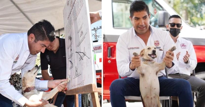 perros ambulancia rescate animal mexico - Ciudad en México tendrá su ambulancia para traslado y rescate de animales. Ayudan a los callejeros