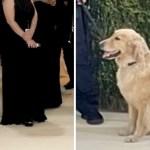 portada perro shawn mendes camila cabello estrella met gala - El perro de Shawn Mendes y Camila Cabello fue la estrella de la MET Gala. Paseó por la alfombra roja