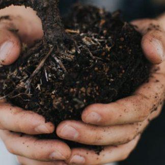 Potting Soils