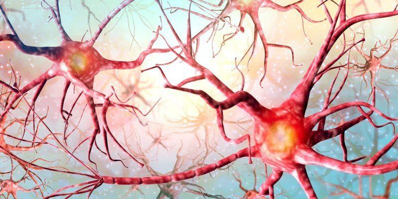 """Resultado de imagen de neuronas"""""""