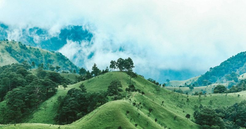 Fotografía de un bosque verde en una colina con niebla en el aire.