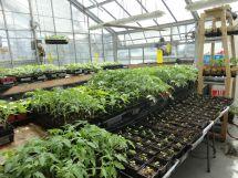 Epic Seedling Concordia Greenhouse