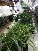 plant sale 1