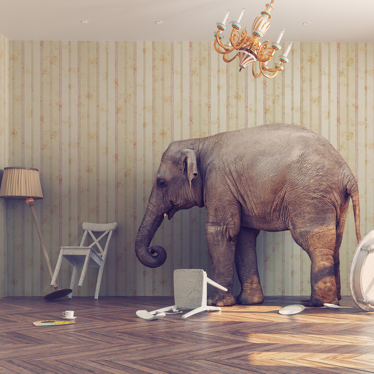 Six Elephants in the Room