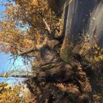 Traffic Advisory:Road Closure Due to Trees Down.