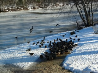 Even an air compressor won't stop hungry ducks!