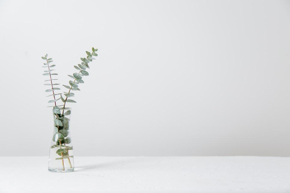 Brand etici e sostenibili - Ecco la lista completa