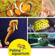 3 entradas individuales a Palma Aquarium