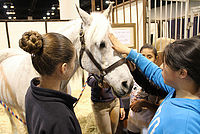 Bonds Between Humans and Horses - Horsing Around in Omaha