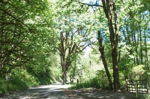 Oregon_Highway_103_North