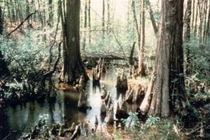 battle-creek-cypress-swamp_420x280_thumb