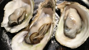 oyster-989182_1280