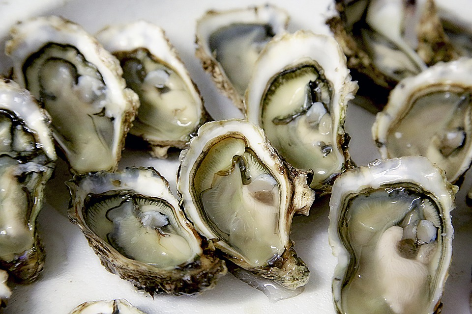 Study Finds Sunscreen Chemicals, Antibiotics, & Endocrine-Disrupting Hormones in Chesapeake Oysters