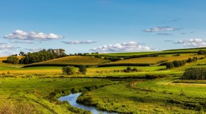 Federal CREP Funding Renewed for Stream Buffers on Farms; Many Existing Contracts Set to Expire