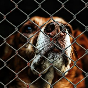 """Animal Shelters Report Over-Crowding as Life Returns to """"Normal"""""""