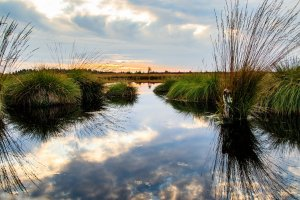 Partnership Preserves More Than 1,000 Acres in Somerset