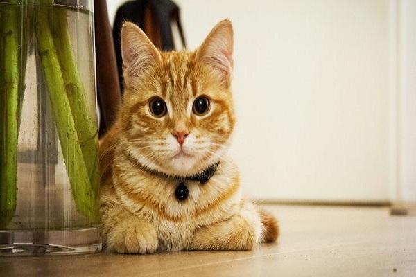 por qué tener un gato en tu hogar
