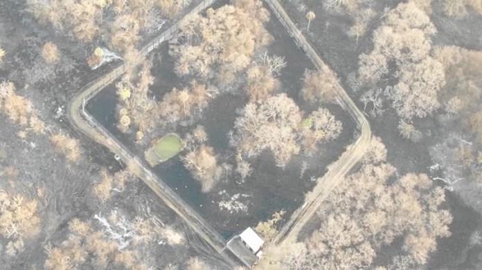 A natureza mostra sua força e poder de recuperação no Pantanal, meses após incêndios destruírem vegetação