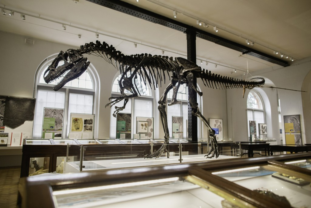 Roary at the Lapworth Museum