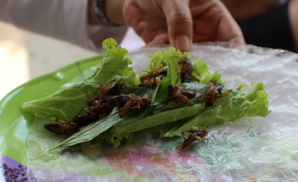 Cricket Spring Roll About Confessions of a Travaholic