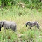 Elephants on parade South African Safari