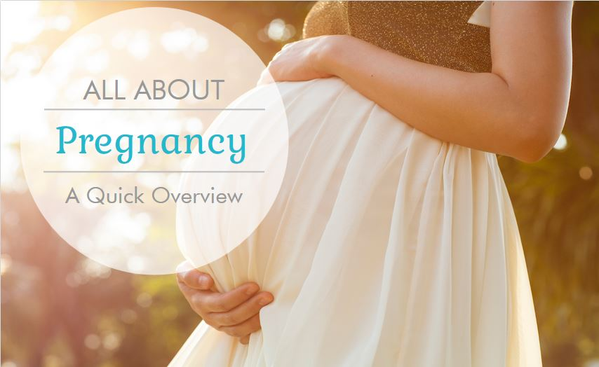 Pregnancy: A Quick Overview