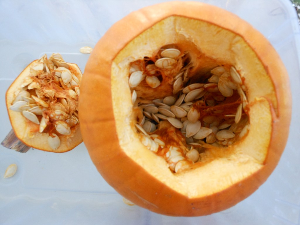 Fun pumpkin science! Rotting pumpkin.