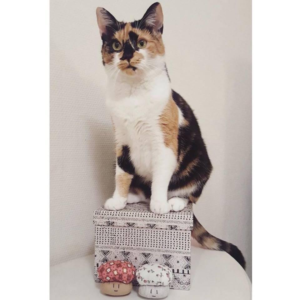 Découvrez le portrait de Chamignons, une boutique de jouets pour chats garnis d herbe à chat faits main et made in france - interview + concours