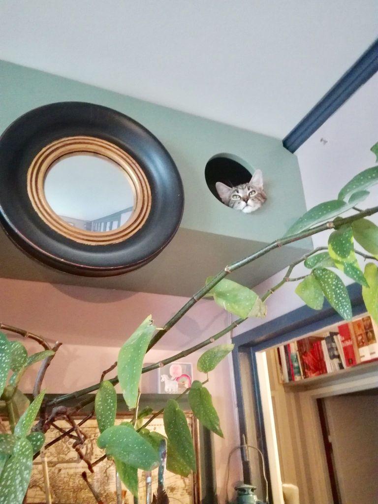 besoin d'aménagement sur mesure pour chat? découvrez le portrait de Gégène the cat + mon avis sur les souribambelles