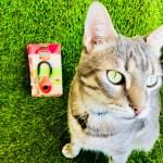 pratiquer le clicker training avec son chat. le guide pour débuter au clicker training. éduquer facilement son animal