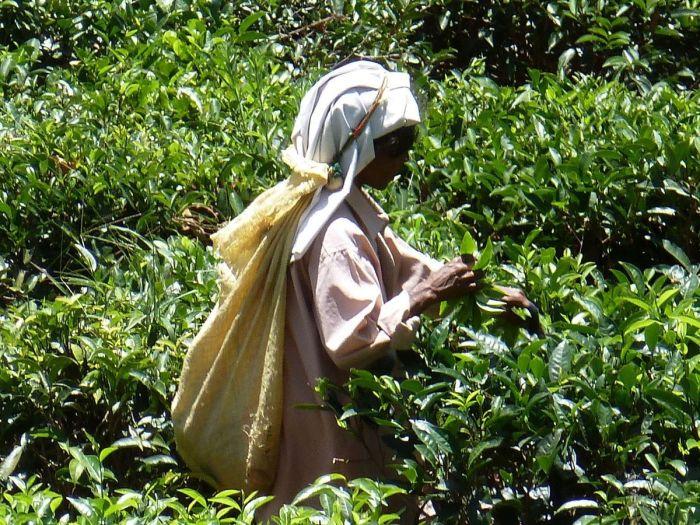 Nord du Sri lanka