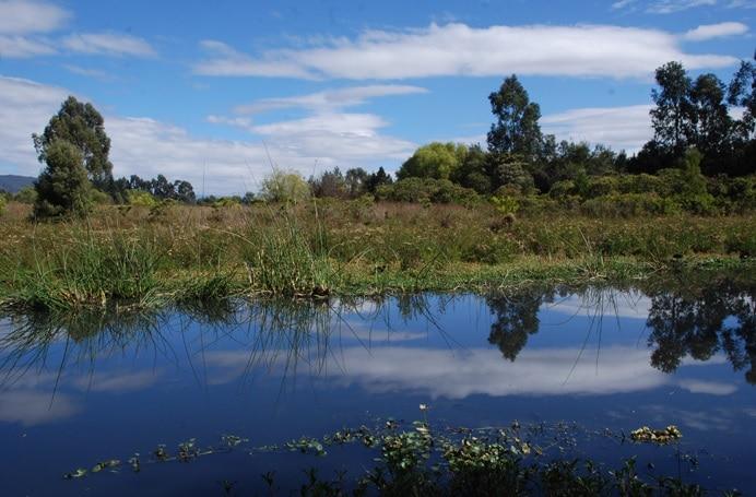 Humedal-Conejera