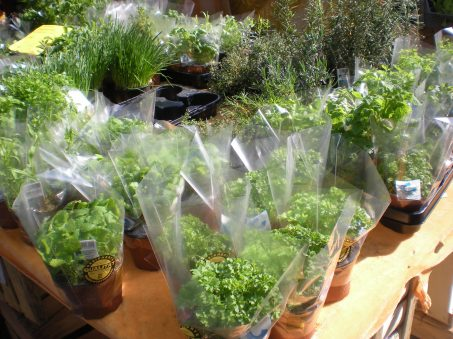 Fresh herbs for sale