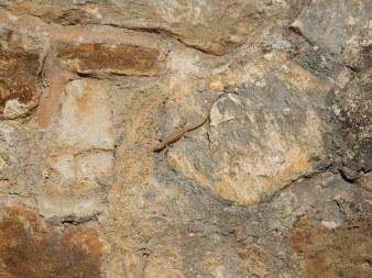 Lizard on the castle wall