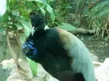 Check out my pretty blue breast!